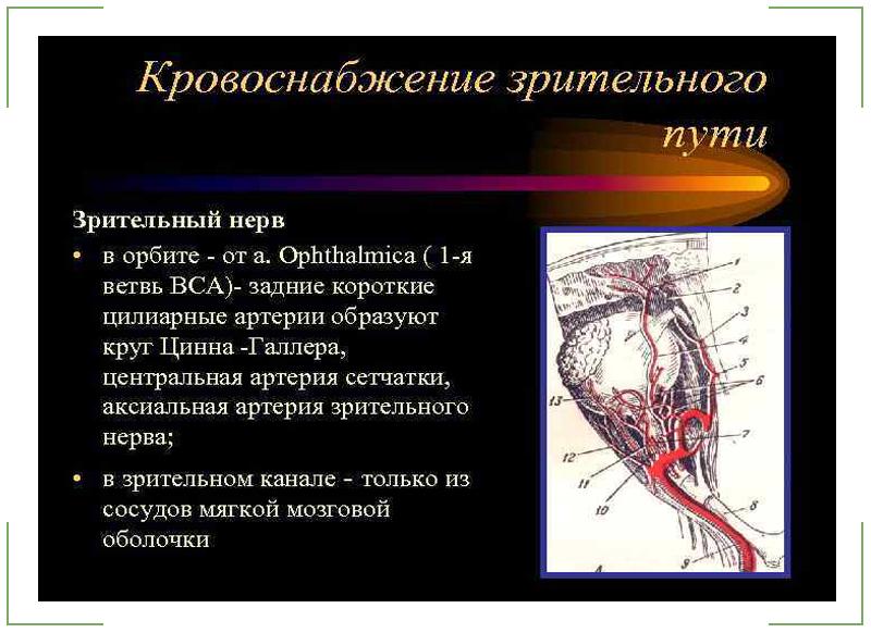 кровоснабжение диска