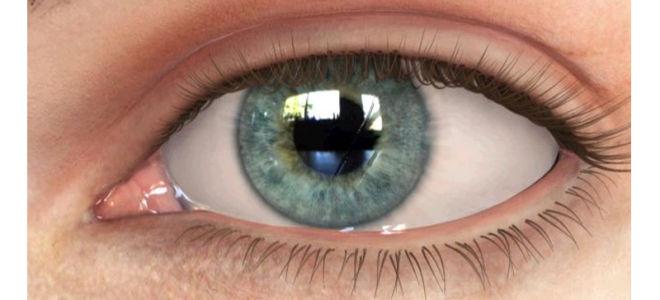 Конъюнктива глаза