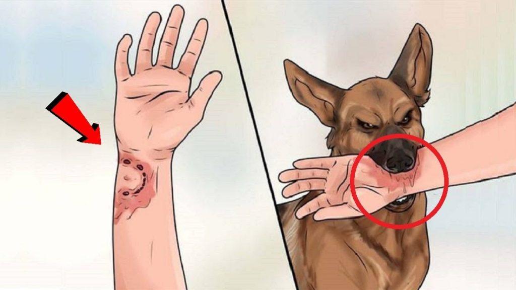 укус собаки