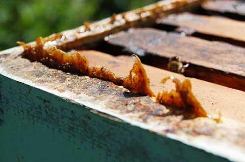 Пчелиный клей в составе различных средств
