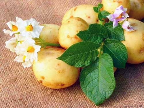 Маски с отварным и запеченным картофелем