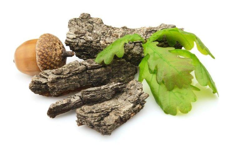 Кора дуба – лечебные свойства для десен и способы приготовления отвара. Кора дуба для десен