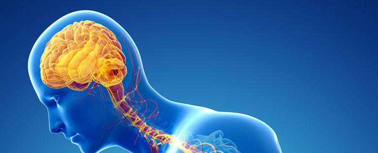 Никотин и нервная система