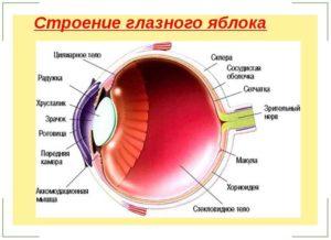 Болит глазное яблоко