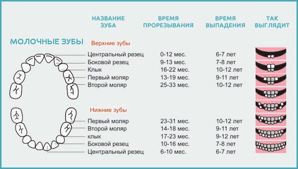 Сколько молочных зубов должно быть у детей: количество и сроки появления
