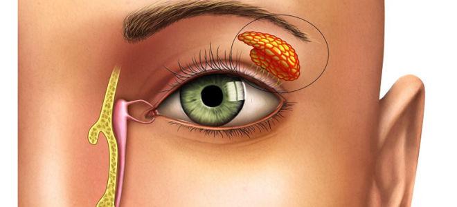 Где находится конъюнктивальный мешок в глазу
