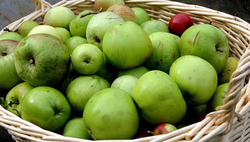 незрелые яблоки