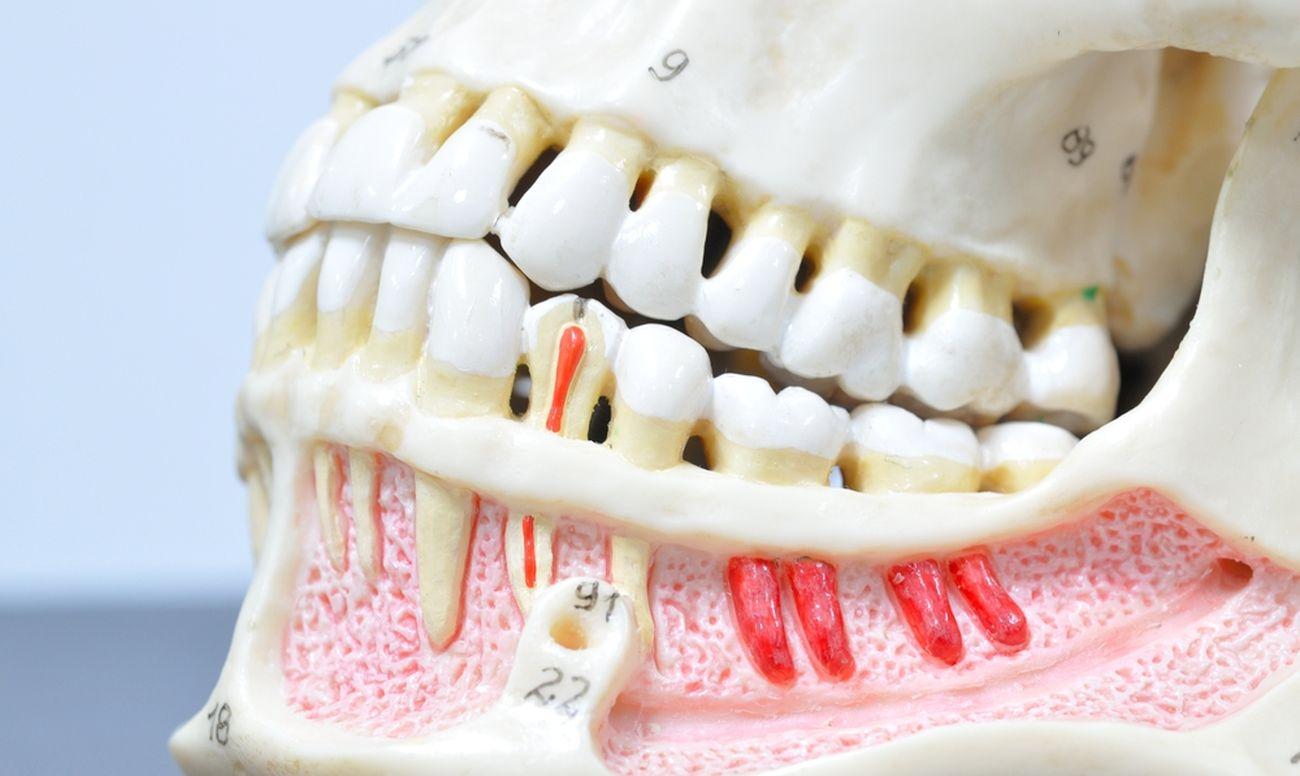 До скольки лет растут зубы