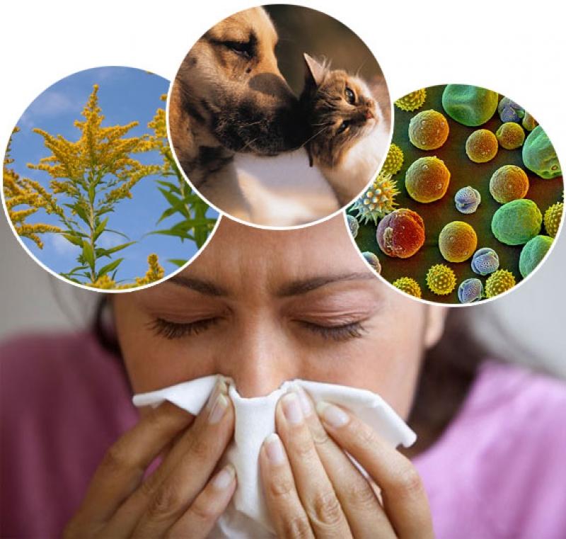 Эффективные народные средства от аллергии