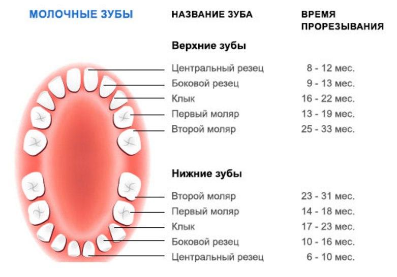 Порядок прорезывания зубов у детей