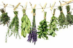 Какими травами можно лечить прыщи
