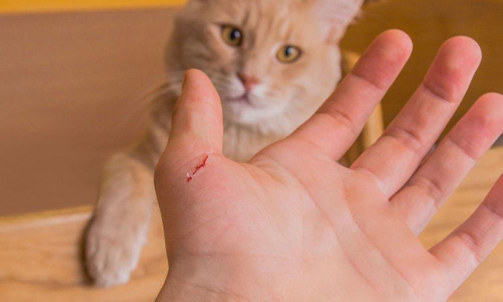 царапина от кошки