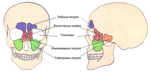 Пневматизация пазух носа достаточная