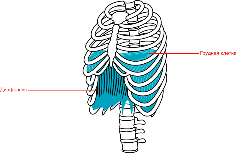 Пранаяма: дыхание для здоровья