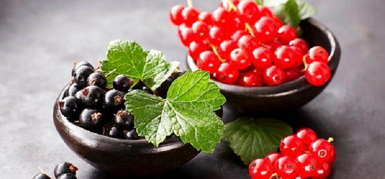 Различие красной и черной смородины