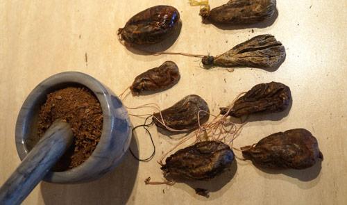 Высушенная бобровая струя