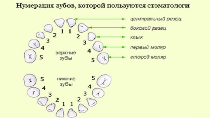 Нумерация зубов