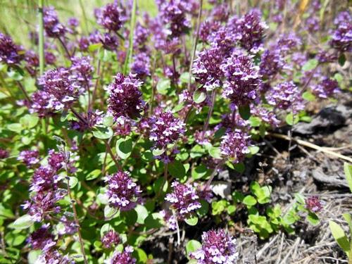 Травы, которые улучшают вид и здоровье кожи рассмотрим эффективность каждого вида